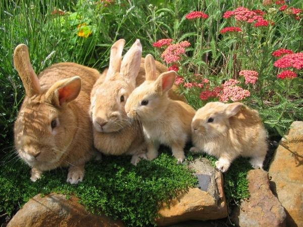 Разбираем все аспекты гибели кроликов